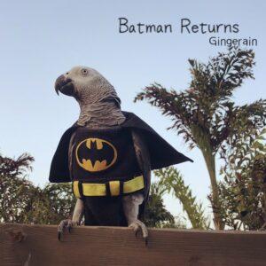 Gingerain Bird clothes Parrot diaper Black bat original hand-made custom bird clothes Black bat